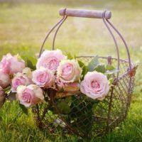 Королевское очарование, или Интересное о розах