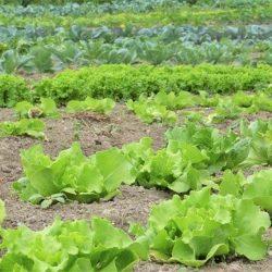 Средства защиты растений от болезней и вредителей