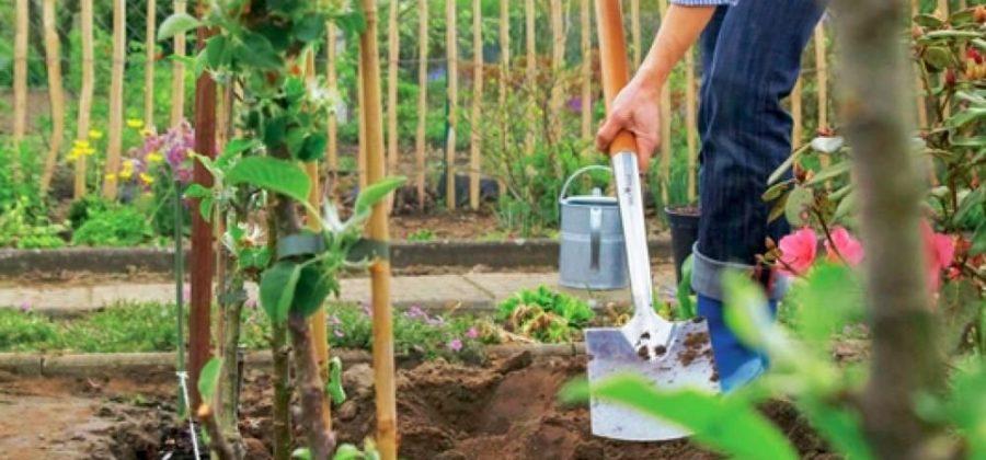 Колоновидные растения: преимущества и особенности выращивания